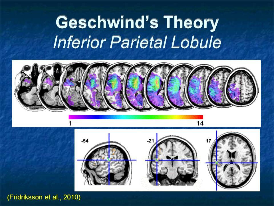 Geschwind's Theory Inferior Parietal Lobule (Fridriksson et al., 2010)