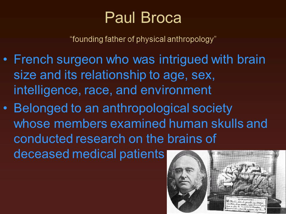 Paul Broca founding father of physical anthropology French surgeon who was intrigued with brain size and its relationship to age, sex, intelligence, race, and environment Belonged to an anthropological society whose members examined human skulls and conducted research on the brains of deceased medical patients