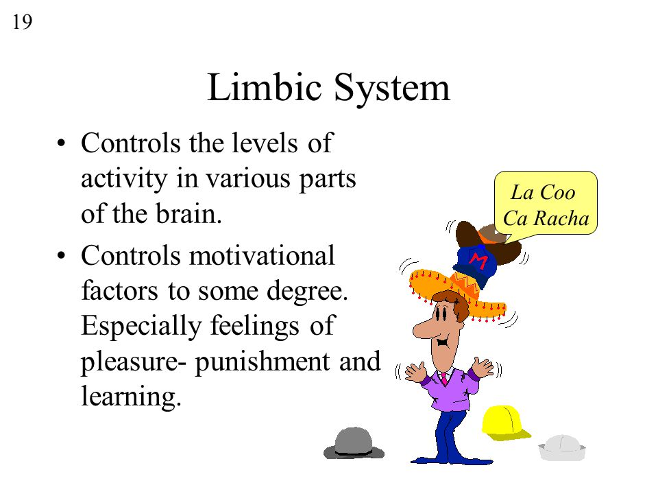 19 Limbic System Controls the levels of activity in various parts of the brain.