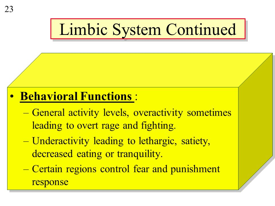 23 Behavioral Functions : –General activity levels, overactivity sometimes leading to overt rage and fighting.