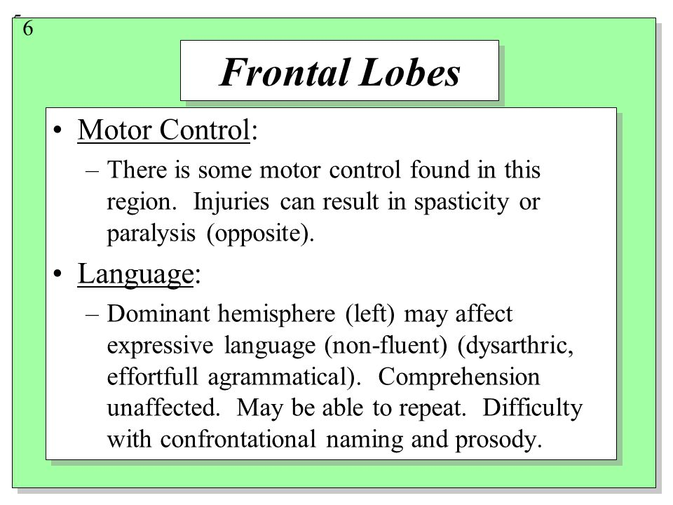 5 Frontal Lobes Motor Control: –There is some motor control found in this region.