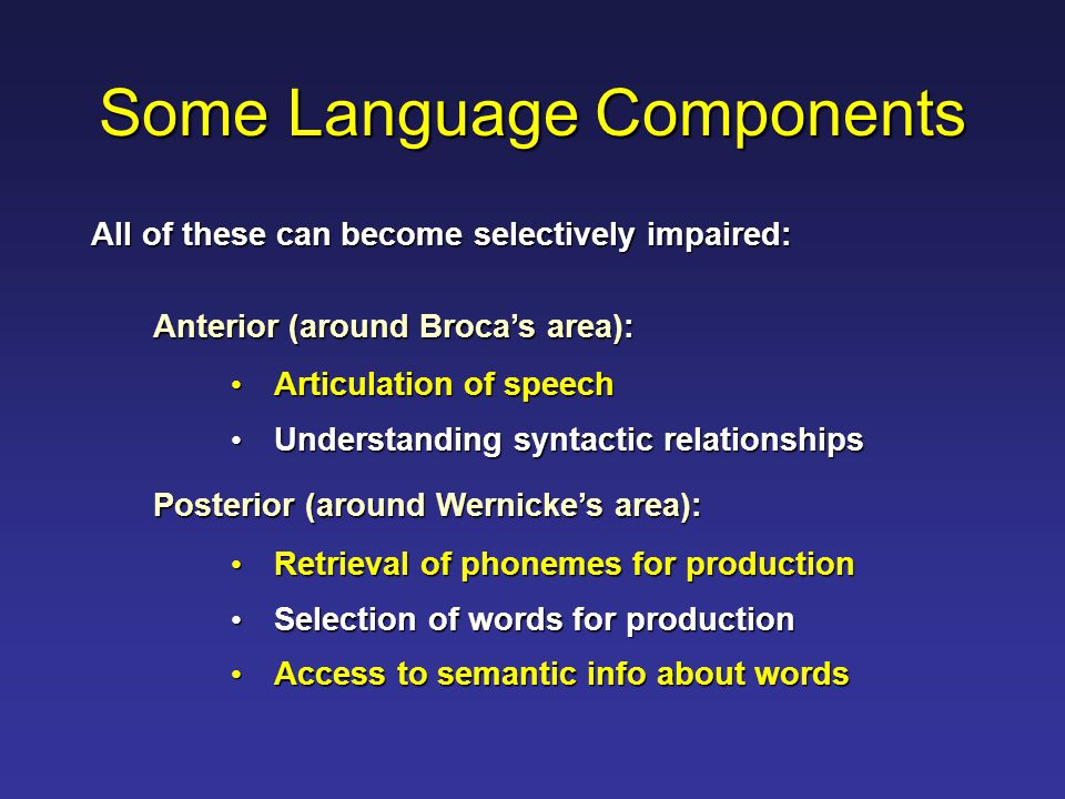 Some Language Components Anterior (around Broca's area): Articulation of speech Articulation of speech Understanding syntactic relationships Understanding syntactic relationships Posterior (around Wernicke's area): Retrieval of phonemes for production Retrieval of phonemes for production Selection of words for production Selection of words for production Access to semantic info about words Access to semantic info about words All of these can become selectively impaired: