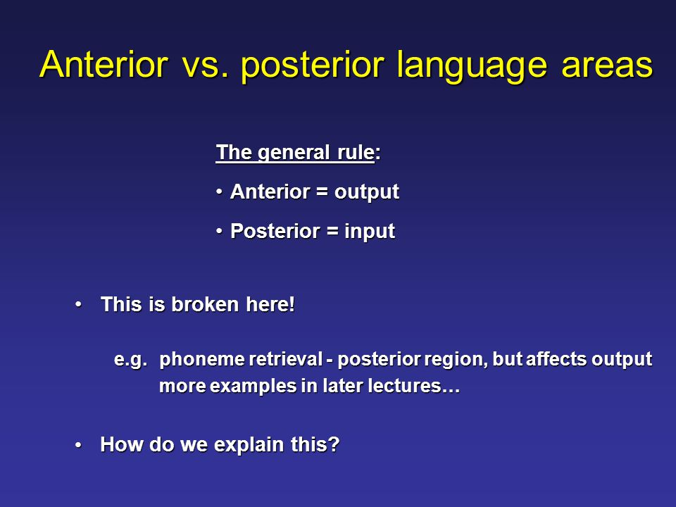 Anterior vs. posterior language areas This is broken here!This is broken here.
