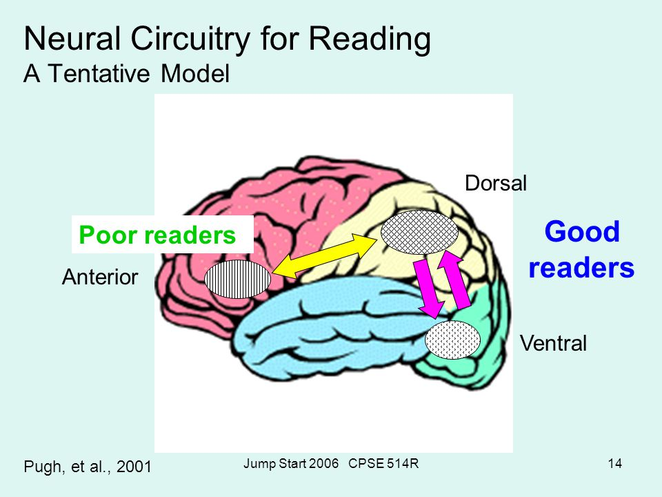 Jump Start 2006 CPSE 514R14 Neural Circuitry for Reading A Tentative Model Pugh, et al., 2001 Dorsal Ventral Anterior Poor readers Good readers