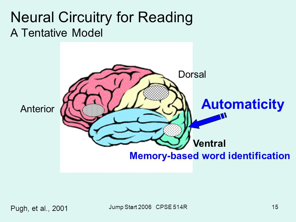 Jump Start 2006 CPSE 514R15 Neural Circuitry for Reading A Tentative Model Automaticity Pugh, et al., 2001 Dorsal Anterior Memory-based word identific