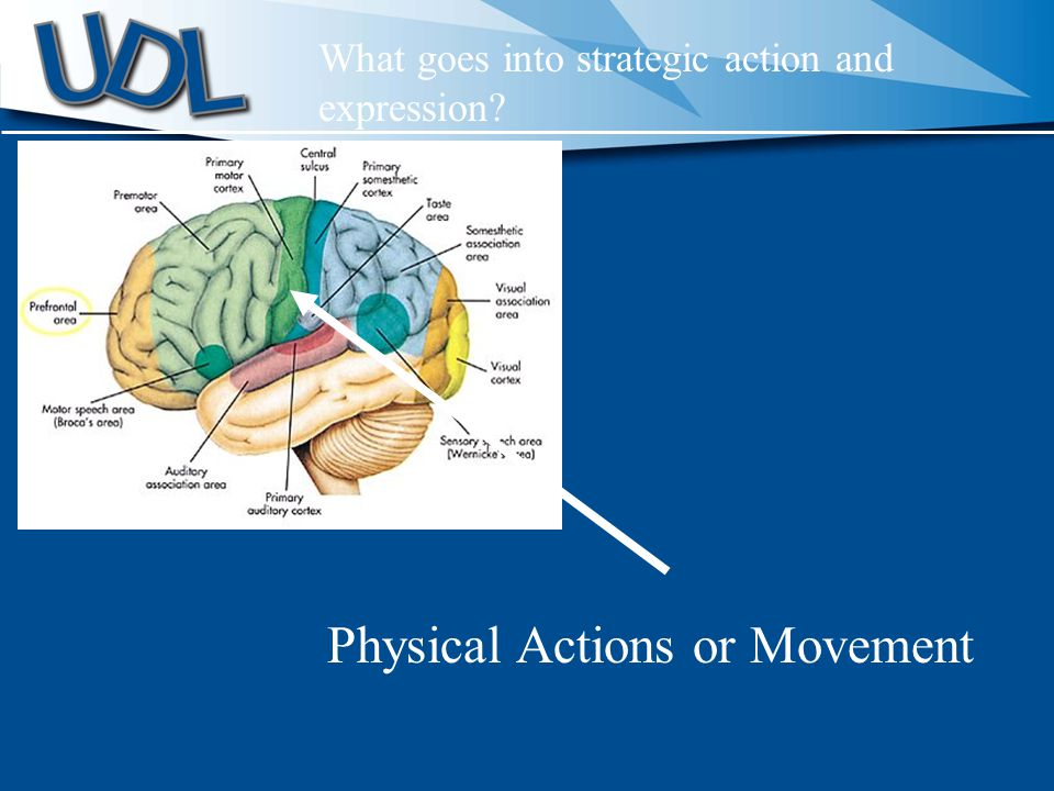 Physical Actions or Movement What goes into strategic action and expression