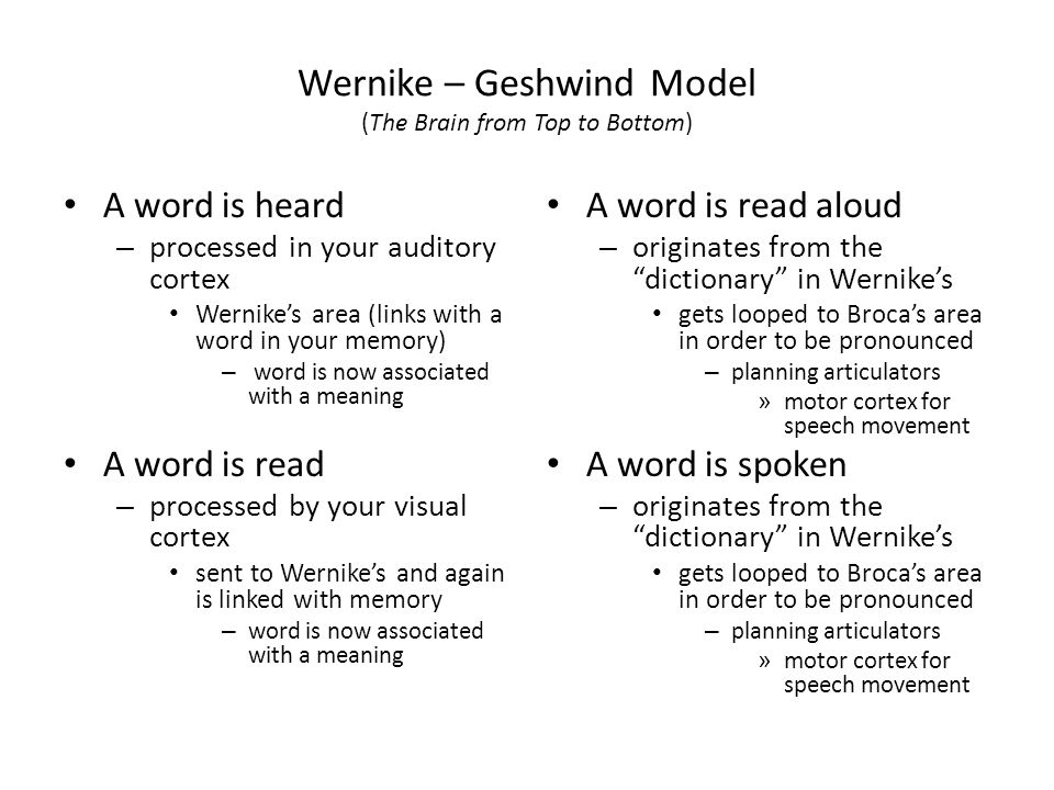 Wernike – Geshwind Model (The Brain from Top to Bottom) A word is heard – processed in your auditory cortex Wernike's area (links with a word in your
