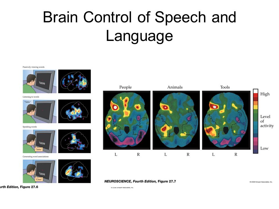 Brain Control of Speech and Language