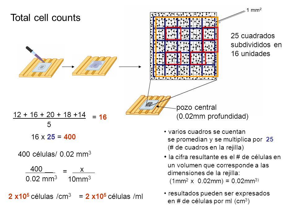 varios cuadros se cuentan se promedian y se multiplica por 25 (# de cuadros en la rejilla) la cifra resultante es el # de células en un volumen que corresponde a las dimensiones de la rejilla: (1mm 2 x 0.02mm) = 0.02mm 3) resultados pueden ser expresados en # de células por ml (cm 3 ) 12 + 16 + 20 + 18 +14 5 = 16 16 x 25 = 400 400 células/ 0.02 mm 3 400 0.02 mm 3 = x 10mm 3 2 x10 5 células /cm 3 = 2 x10 5 células /ml Total cell counts 25 cuadrados subdivididos en 16 unidades pozo central (0.02mm profundidad)