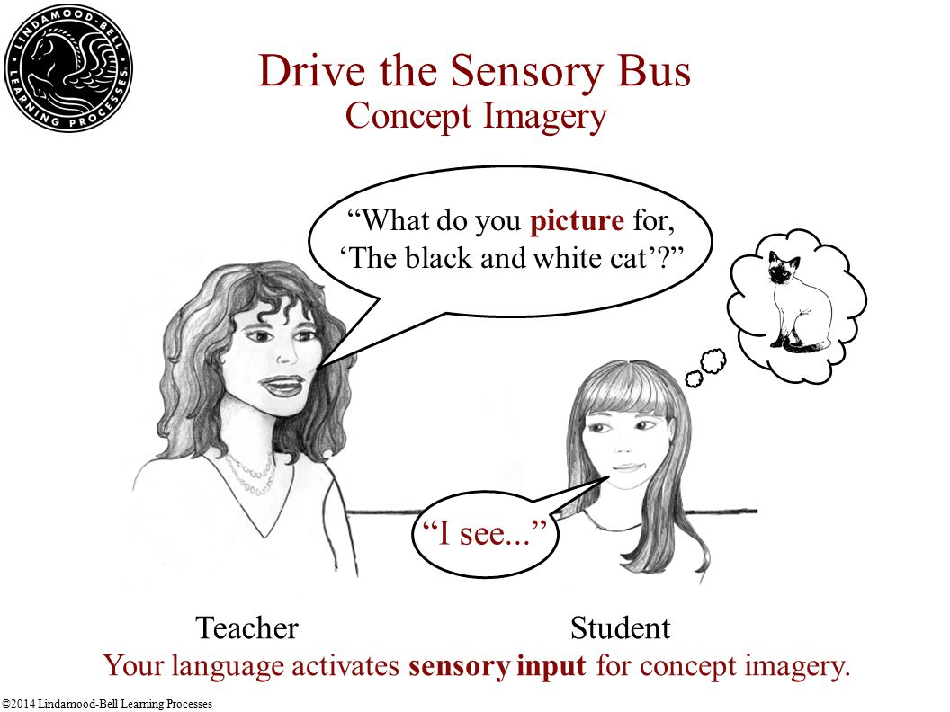 ©2014 Lindamood-Bell Learning Processes Drive the Sensory Bus Concept Imagery I see... TeacherStudent Your language activates sensory input for concept imagery.
