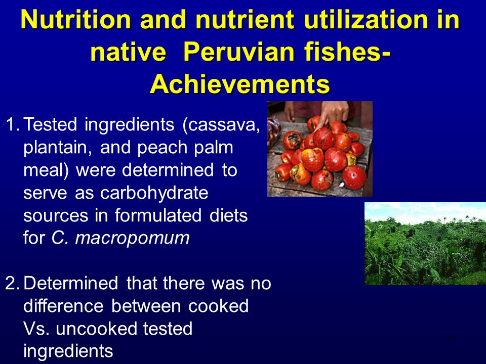 11 Nutrition and nutrient utilization in native Peruvian fishes- Achievements 1.Tested ingredients (cassava, plantain, and peach palm meal) were determined to serve as carbohydrate sources in formulated diets for C.