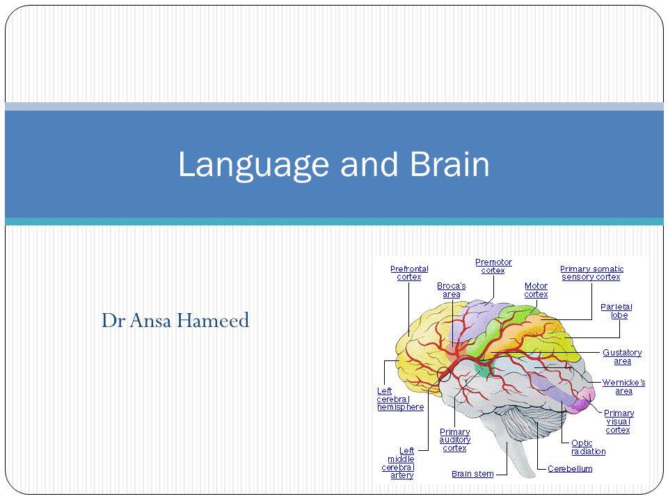 Dr Ansa Hameed Language and Brain