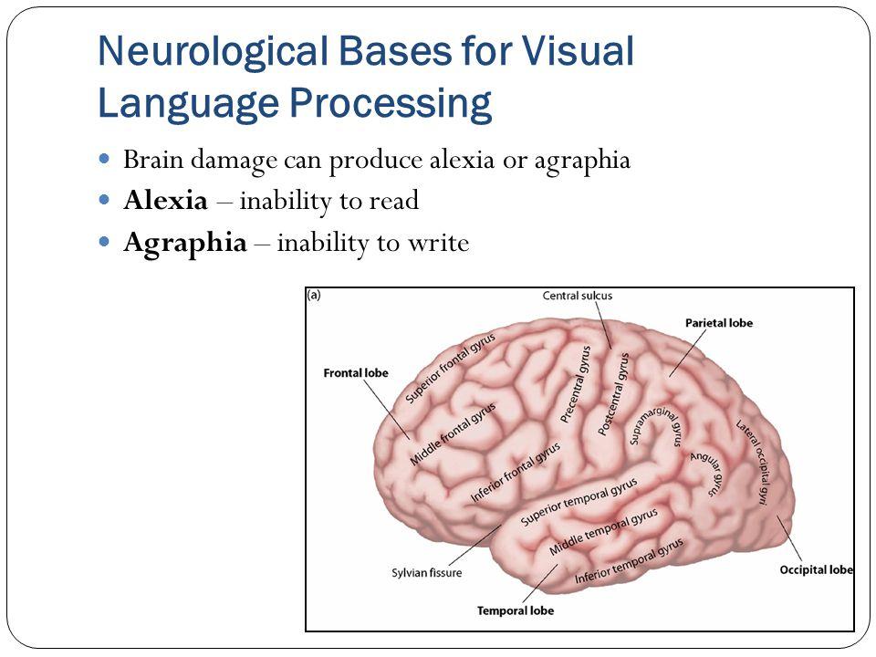 Neurological Bases for Visual Language Processing Brain damage can produce alexia or agraphia Alexia – inability to read Agraphia – inability to write