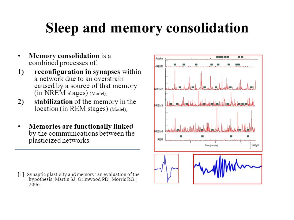 Sleep and memory consolidation Memory consolidation is a combined processes of: 1)reconfiguration in synapses within a network due to an overstrain ca
