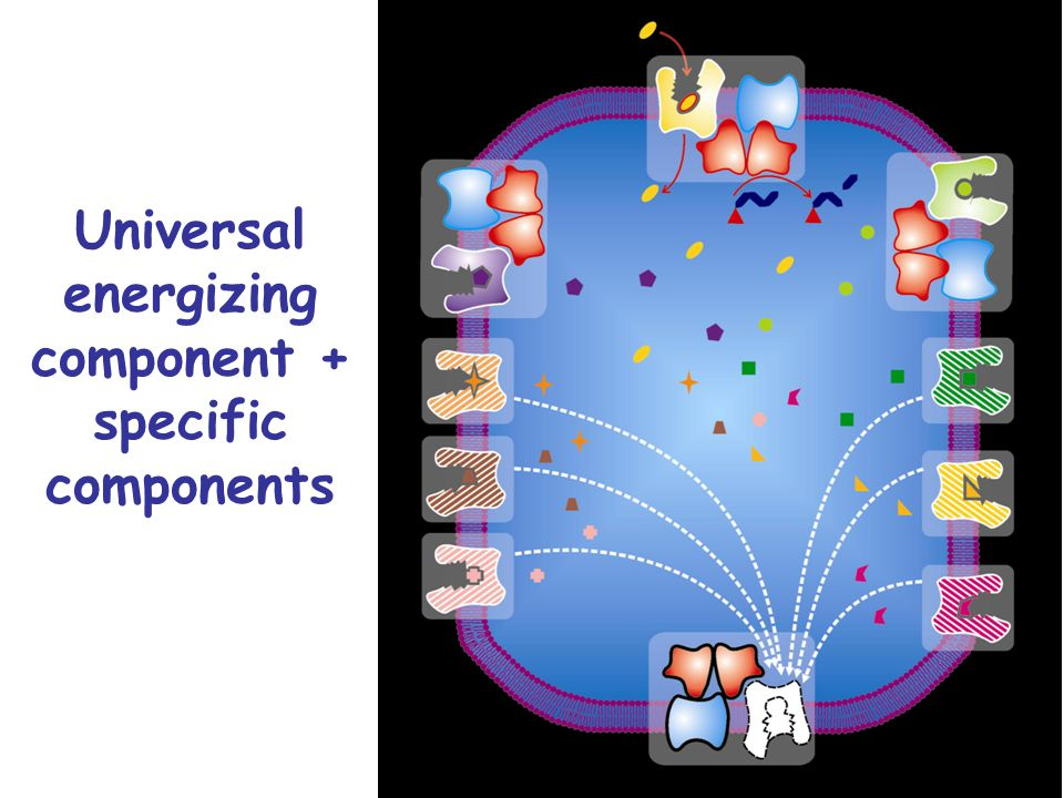 Universal energizing component + specific components