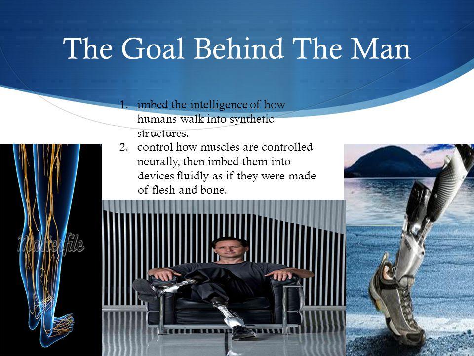 The Typical Human Leg
