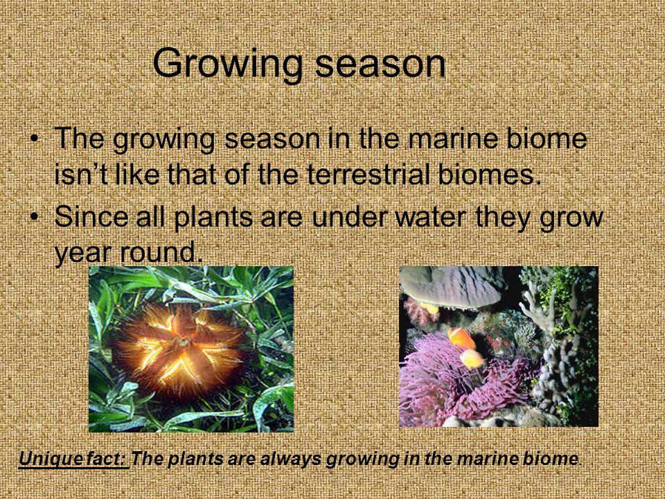 Growing season The growing season in the marine biome isn't like that of the terrestrial biomes.