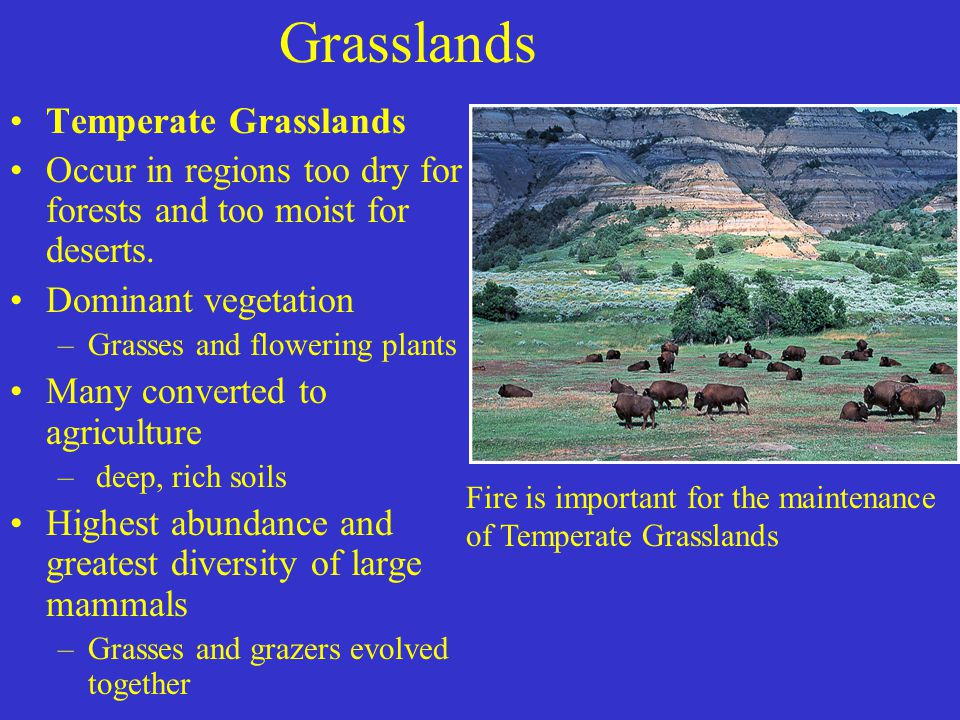 Grasslands Temperate Grasslands Occur in regions too dry for forests and too moist for deserts.