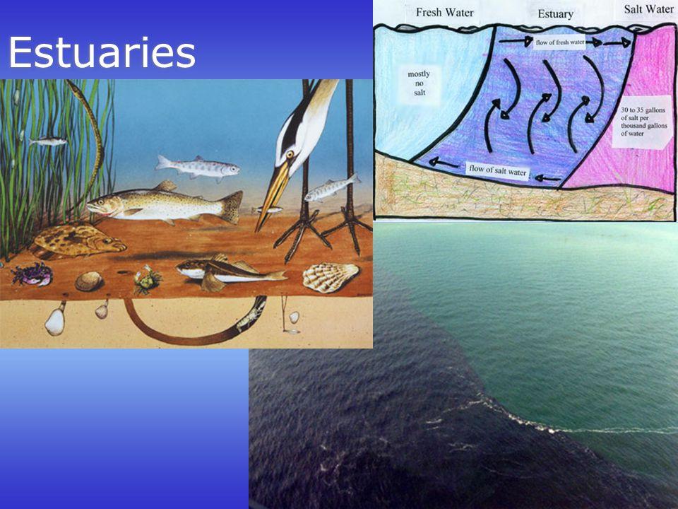 Estuaries