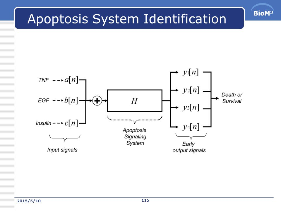 BioM 3 Apoptosis System Identification 2015/5/10 114