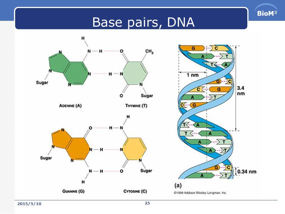 BioM 3 Base pairs  鹼基對是形成核酸 DNA 、 RNA 單 體以及編碼遺傳 信息的化學結構。組成鹼基對的鹼基包括 A 、 G 、 T 、 C 、 U 。嚴格地說,鹼基對是一對相互匹配的 鹼基(即 A : T , G : C , A : U 相互作用)被氫鍵 連接起來。然而,它常被用來衡量 DNA 和 RNA 的 長度(儘管 RNA 是單鏈)。它還與核苷酸互換使 用,儘管後者是由一個五碳 糖、磷酸和一個鹼基 組成。 DNA RNA  鹼基對通常簡寫做 bp( 英語 base pair) ,千鹼基對 爲 kbp ,或簡寫作 kb (對於雙鏈核酸。對於單鏈 核酸, kb 指千鹼基)。 2015/5/10 24