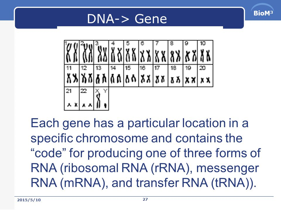 BioM 3 DNA and Gene Human Genome has been estimated about 30000. 2015/5/10 26