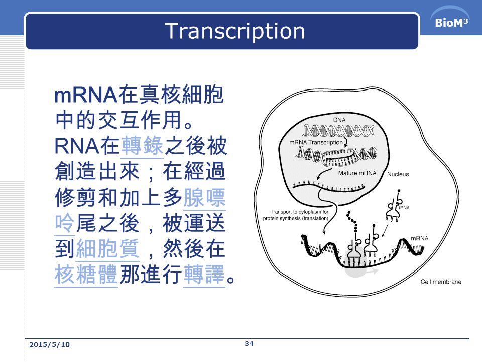 BioM 3 Transcription mRNA ,為 messenger RNA 的簡稱,或稱為信使 RNA 。 mRNA 上帶著從 DNA 轉錄來的,提供轉譯成蛋白質所需 訊息。 Messenger RNA (mRNA) 是攜帶從 DNA 而來的 遺傳訊息,到細胞中合成蛋白質的核糖體位置的 RNA 。 mRNA 在它短暫的存在時間中,經過了數個步驟:在轉 錄的過程中,一個叫做 RNA 聚合酶的酵素,按照其需要, 從 DNA 中複製出一段基因到 mRNA 上。在原核生物中, mRNA 並未被進一步去處理 ( 但有些罕有的特例 ) ,而經 常是在轉錄過程中,同時也進行轉譯。在真核生物中, 轉錄跟轉譯發生在細胞的不同位置 ( 轉錄發生在 DNA 所 儲存的細胞核中,而轉譯是發生在核糖體所在的細胞質 中 ) 。 2015/5/10 33