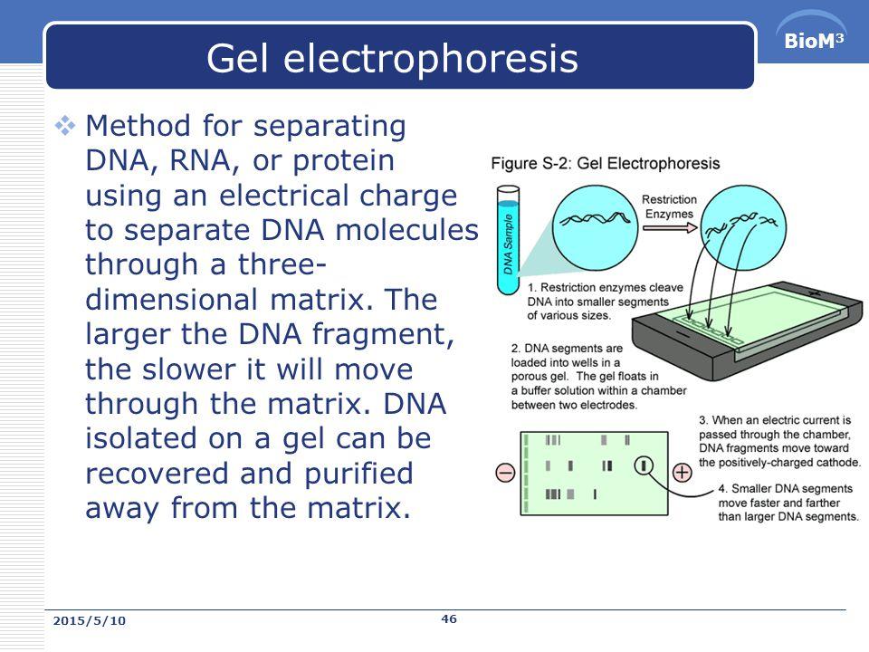 BioM 3 Transcription 而且在真核生物中, mRNA 在準備好轉譯前需要經過許多處理的步驟: 1.