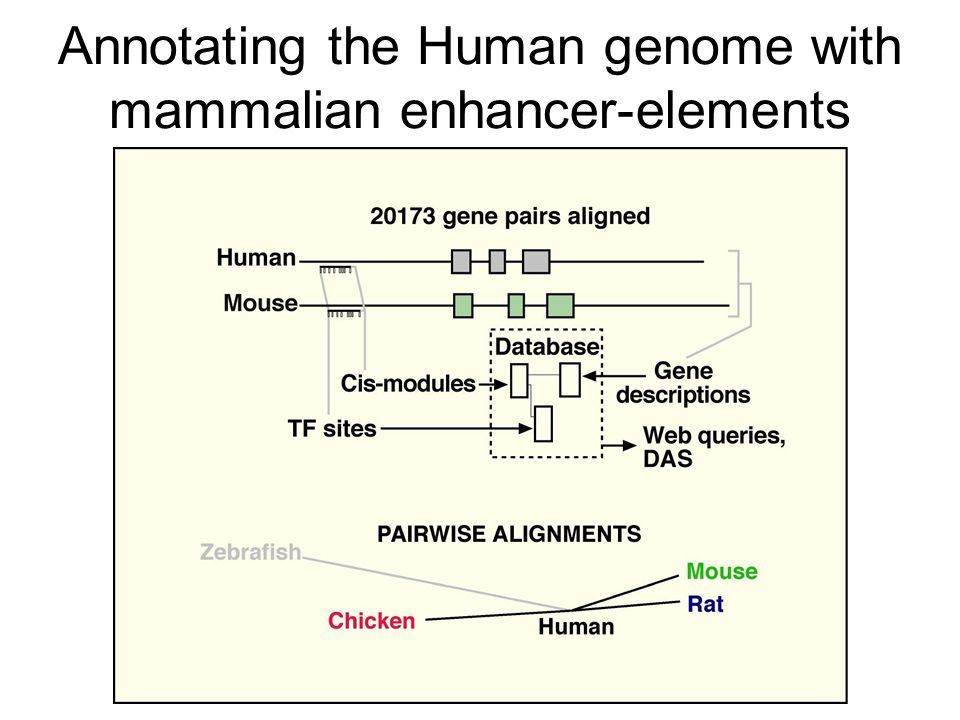 Annotating the Human genome with mammalian enhancer-elements