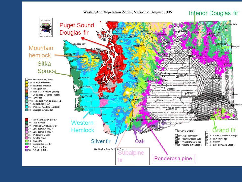 Ponderosa pine Silver firOak Sitka Spruce Grand fir Puget Sound Douglas fir Subalpine fir Western Hemlock Mountain hemlock Interior Douglas fir