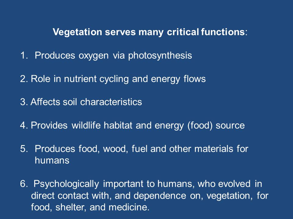 Vegetation serves many critical functions: 1.Produces oxygen via photosynthesis 2.