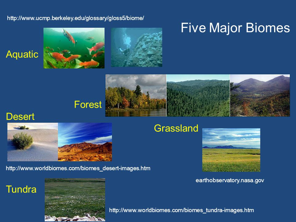 http://www.ucmp.berkeley.edu/glossary/gloss5/biome/ Aquatic Forest Desert Grassland http://www.worldbiomes.com/biomes_desert-images.htm Tundra earthob
