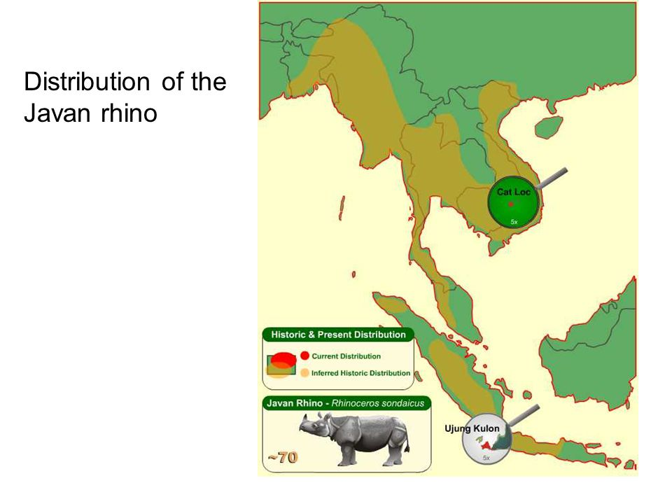 Distribution of the Javan rhino