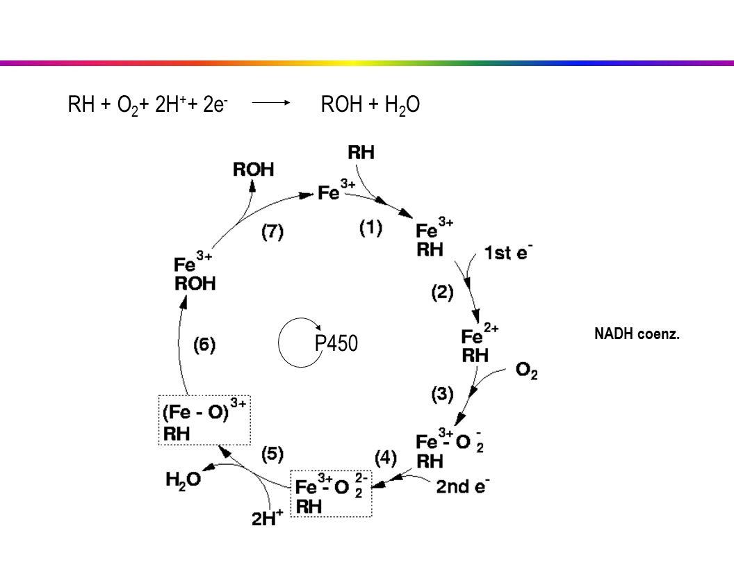RH + O 2 + 2H + + 2e - ROH + H 2 O P450 NADH coenz.