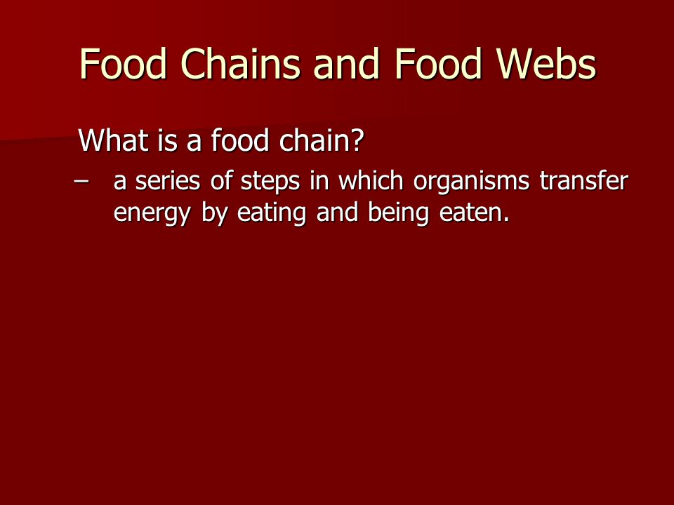 What is a food chain. What is a food chain.