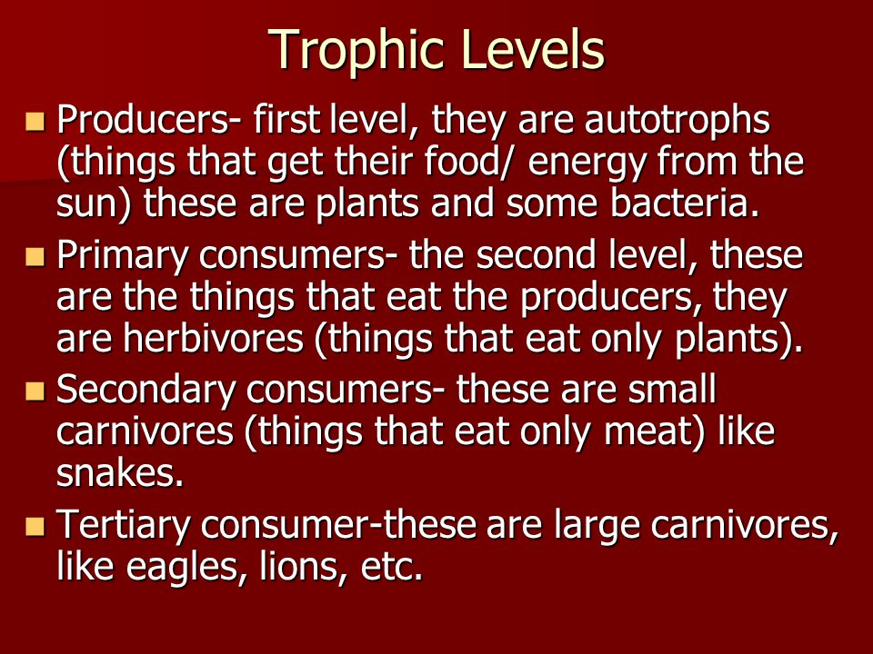 Trophic Levels Producers- first level, they are autotrophs (things that get their food/ energy from the sun) these are plants and some bacteria.