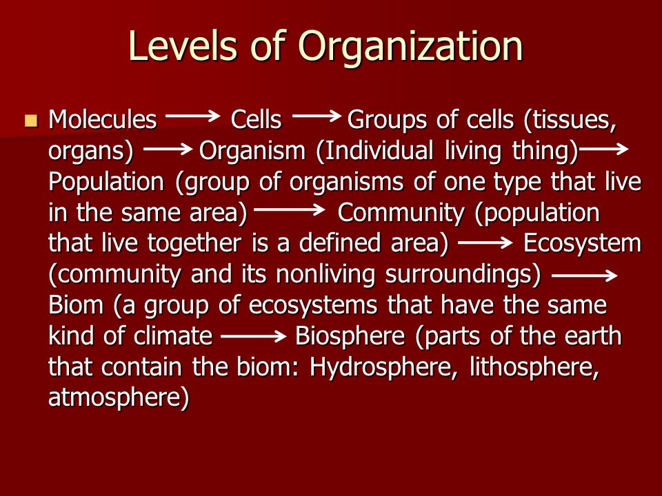 Levels of Organization Molecules Cells Groups of cells (tissues, organs) Organism (Individual living thing) Population (group of organisms of one type