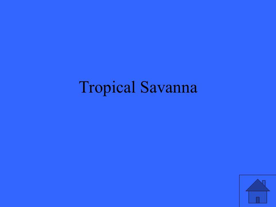Tropical Savanna