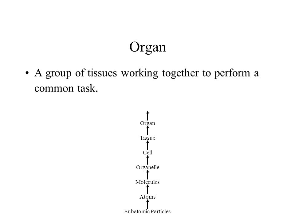 Organ A group of tissues working together to perform a common task. Subatomic Particles Atoms Molecules Organelle Cell Tissue Organ