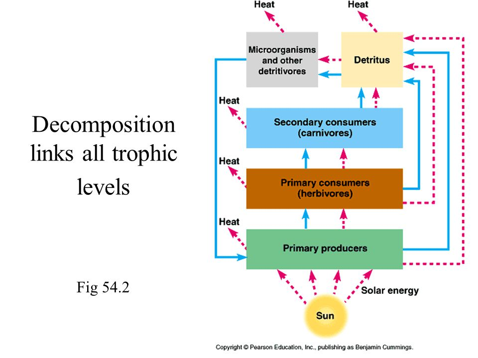 Decomposition links all trophic levels Fig 54.2