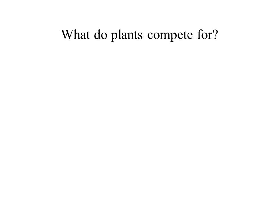 What do plants compete for?