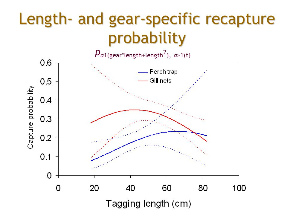 Length- and gear-specific recapture probability p a1(gear*length+length 2 ), a>1(t)