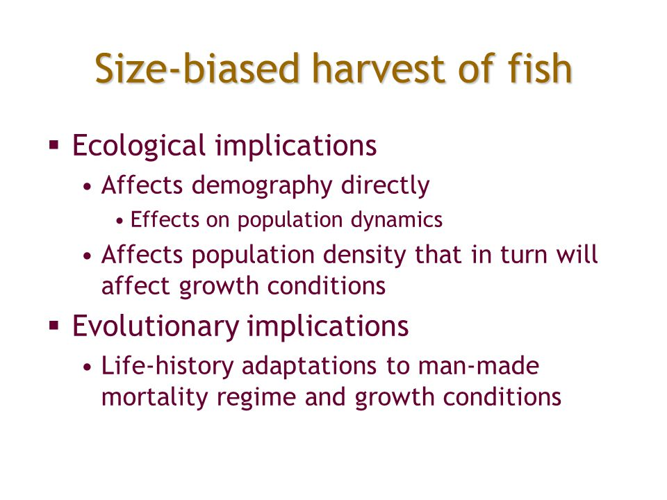 Size-biased harvest of fish  Ecological implications Affects demography directly Effects on population dynamics Affects population density that in tu