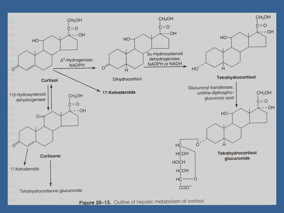  Addison disease: destruction of adrenal cortex by autoimmune diseases/T.B.