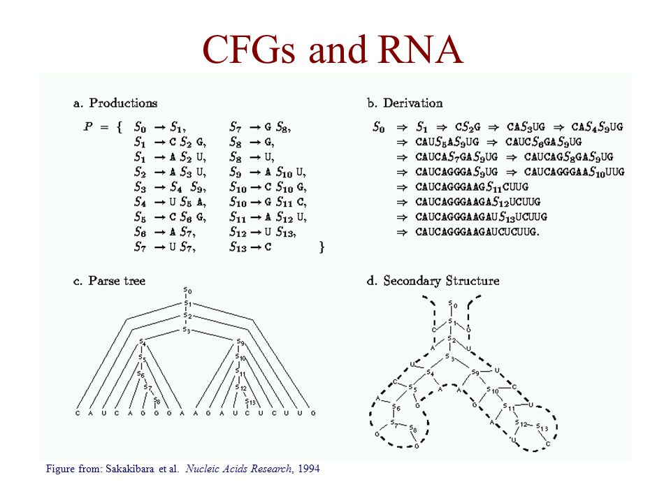 CFGs and RNA Figure from: Sakakibara et al. Nucleic Acids Research, 1994