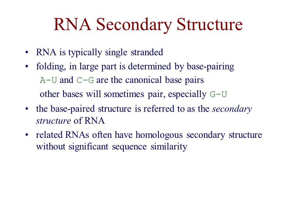 RNA Secondary Structure RNA is typically single stranded folding, in large part is determined by base-pairing A-U and C-G are the canonical base pairs