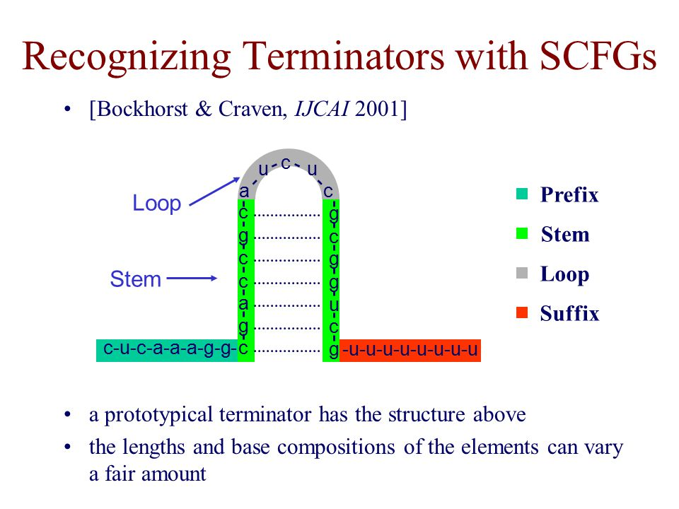 Recognizing Terminators with SCFGs a prototypical terminator has the structure above the lengths and base compositions of the elements can vary a fair amount Prefix Stem Loop Suffix c g a c c g c c-u-c-a-a-a-g-g- g c u g g c g u a u c c -u-u-u-u-u-u-u-u Stem Loop [Bockhorst & Craven, IJCAI 2001]