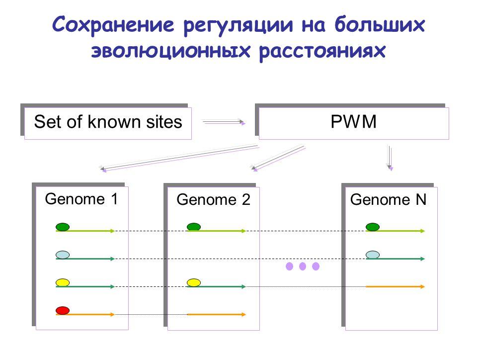 Сохранение регуляции на больших эволюционных расстояниях Genome 2 Genome 1 Set of known sites PWM Genome N