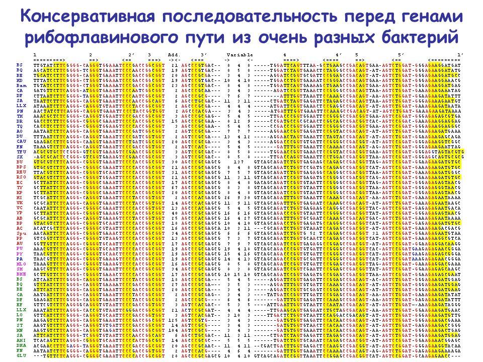 Консервативная последовательность перед генами рибофлавинового пути из очень разных бактерий
