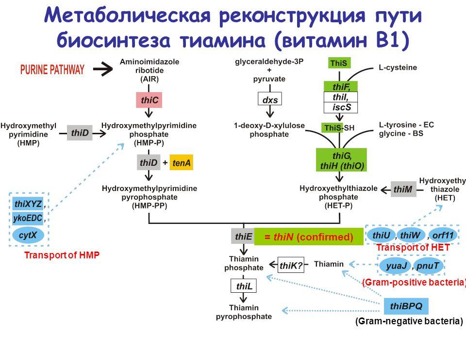 Метаболическая реконструкция пути биосинтеза тиамина (витамин В1) = thiN (confirmed) (Gram-positive bacteria) (Gram-negative bacteria) Transport of HMP Transport of HET